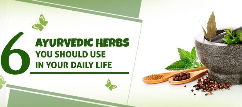 6 Ayurvedic Herbs You Should Use in Your Daily Life